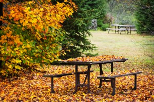 Picnic table with autumn leaves